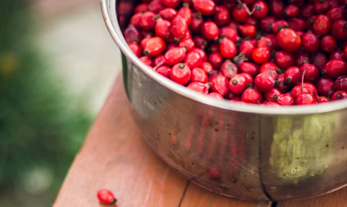 What To Do With Fresh Goji Berries Foods Guy